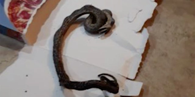 The mother of two said she did not know how the snake got into the oven.