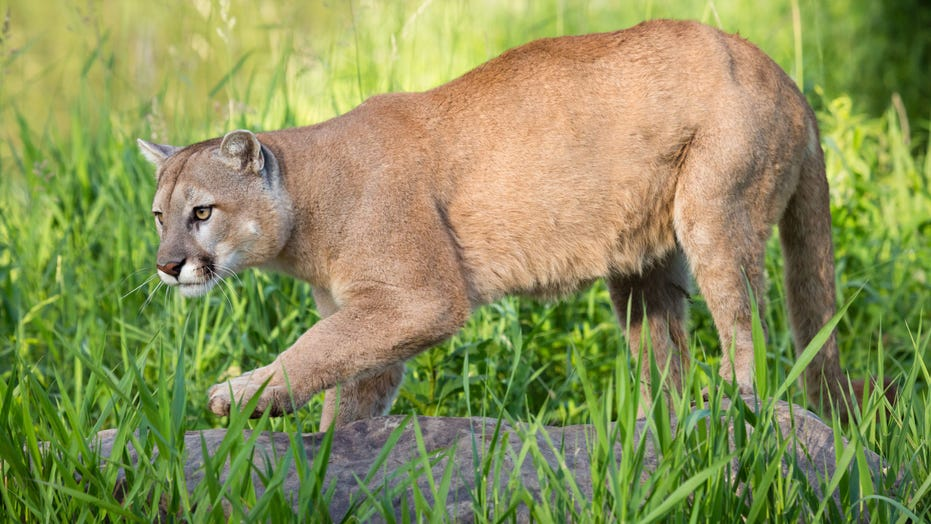 Texas man's death prompts conflicting reports on whether he was killed by mountain lion