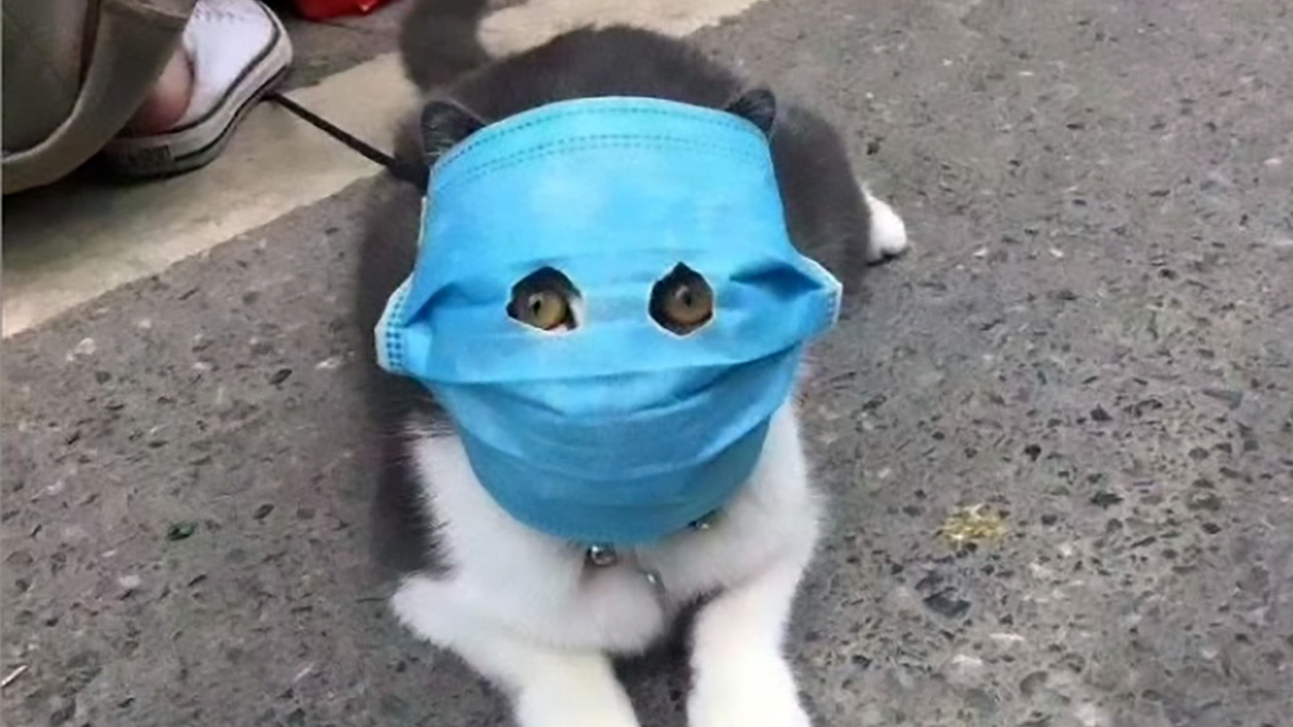 [Image: Animals-Face-Mask-ASIAWIRE-4.jpg?ve=1&tl=1]