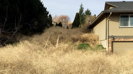 Washington home buried under 15-foot mountain of tumbleweed