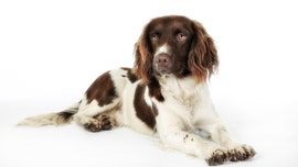 Dog lands sponsorships, social media followers for rock star hairdo: 'His hair makes him so unique'