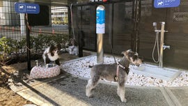 Japanese airport introduces 'first of its kind' dog toilet area, complete with 'pee pole'
