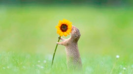Photographer captures squirrel smelling yellow flowers: 'Nature at its most beautiful'
