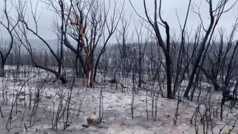 Australia rain may put out remaining wildfires in New South Wales by end of week after recent deluge