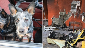 New Mexico house fire sparked by 'curious pup,' video shows