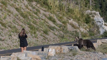 Photos show woman getting dangerously close to grizzly bear while taking pictures