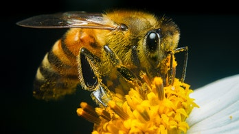 Swarm of nearly 40,000 bees in California send 5 to hospital