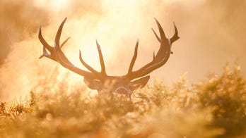 Wisconsin hunter makes possible record-breaking buck discovery