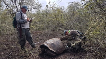 Descendants from extinct tortoise species discovered in Galapagos