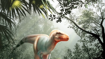 New 'reaper of death' Tyrannosaur species discovered in Canada