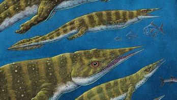 'Weird' reptile with long snout that lived 200M years ago discovered in Alaska