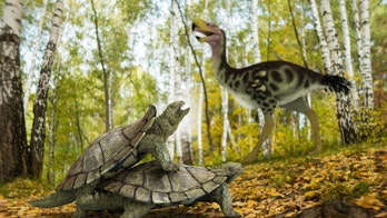 'Bizarre' turtle managed to survive asteroid that wiped out dinosaurs