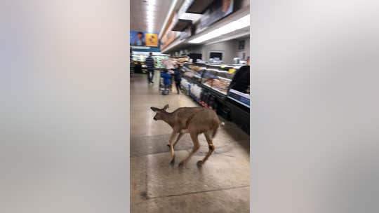 Kroger shoppers in Indiana film deer running through aisles, jumping meat counter
