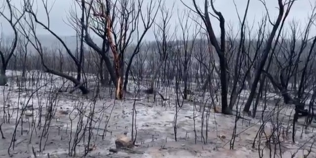 Recent rains have helped drenched deadly wildfires in Australia.