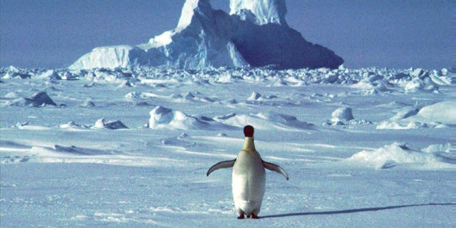 FILE - In this undated file photo, a lonely penguin appears in Antarctica during the southern hemisphere's summer season. The temperature in northern Antarctica hit nearly 65 degrees. (AP Photo/Rodrigo Jana, File)
