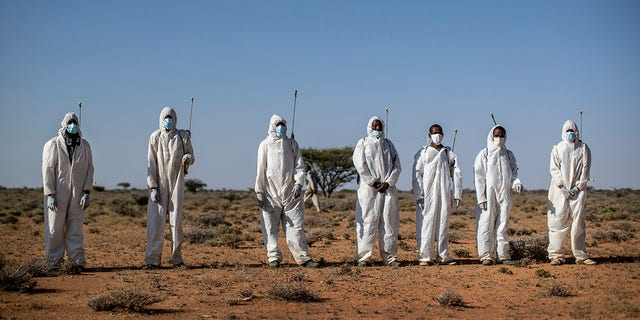 Pest-control sprayers demonstrate their work on the thorny bushes in the desert that is the breeding ground of desert locusts in the desert near Garowe on Fe. 4. (AP Photo/Ben Curtis)