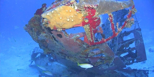 Tail section from an SBD-5 Dauntless dive bomber from Operation Hailstone resting on the floor of Truk Lagoon.