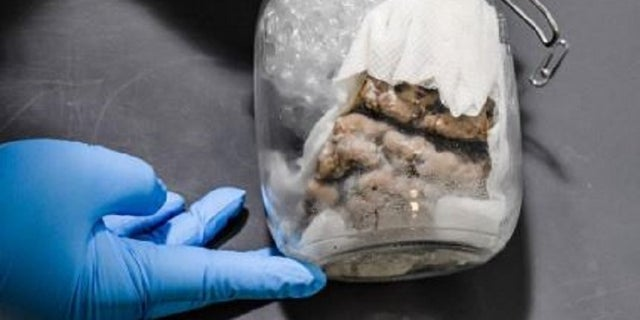 Human brain inside jar found in MI  was en route to Wisconsin