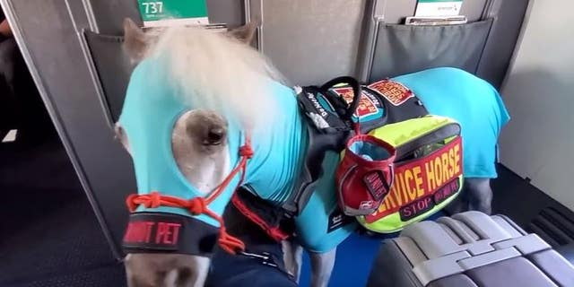 """A Michigan woman is sharing the positive """"tail"""" of her recent American Airlines flights with aminiature service horse."""
