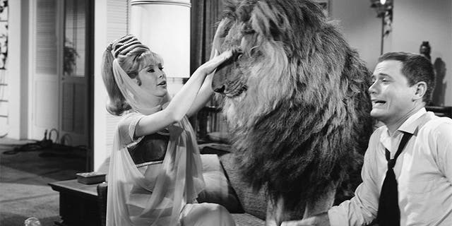 Barbara Eden with Larry Hagman and the infamous lion.