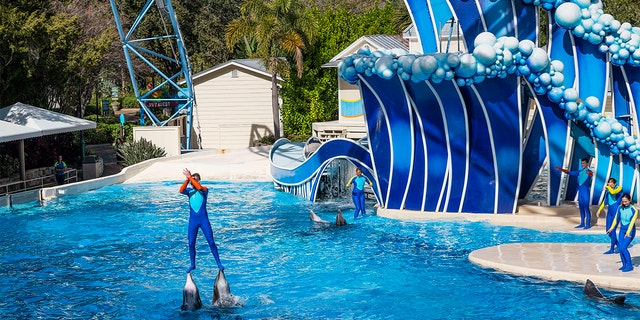 Westlake Legal Group Seaworld-Dolphin-Getty SeaWorld trainers will no longer ride dolphins at theme parks New York Post fox-news/travel/vacation-destinations/seaworld-orlando fox-news/travel/general/theme-parks fox-news/lifestyle fnc/travel fnc article 5041a744-6fc7-59a0-aefa-06c73c62c77e