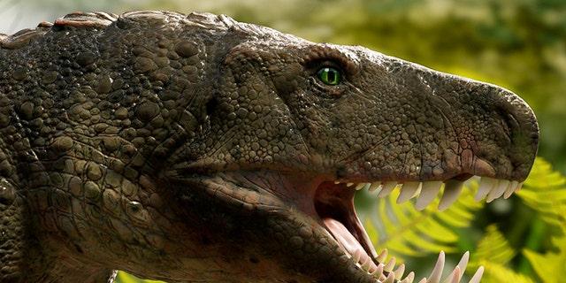 Westlake Legal Group crocodile-dinosaur-1 'Bonecrushing' crocodile that hunted dinosaurs 230M years ago discovered in Brazil fox-news/science/archaeology/fossils fox-news/science/archaeology/dinosaurs fox-news/science fox-news/columns/digging-history fox news fnc/science fnc Chris Ciaccia article 2d7bd541-920d-51ee-bdf4-bff528ea1283