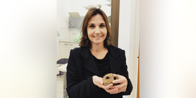 Dr. Hila May holds a hadrosaur vertebra. (Credit: Tel Aviv University)