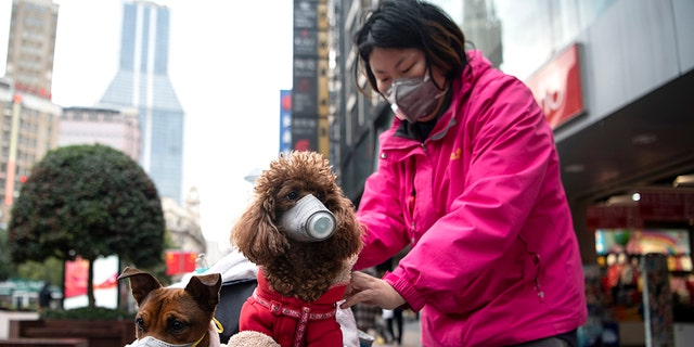 """A woman pushes a stroller with two dogs [both not the """"weak positive"""" dog] wearing masks along a street in Shanghai on February 19, 2020. (Photo by NOEL CELIS / AFP) (Photo by NOEL CELIS/AFP via Getty Images)"""