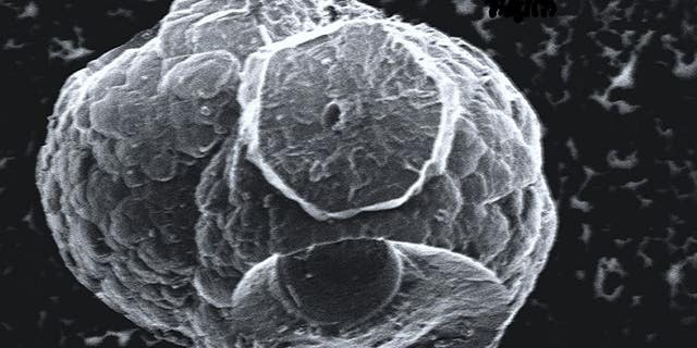 Scientists have called this image of a microhabitat that grew in methane hydrate the 'Death Star' - it grew from microbial activity at very cold temperatures, far underwater.