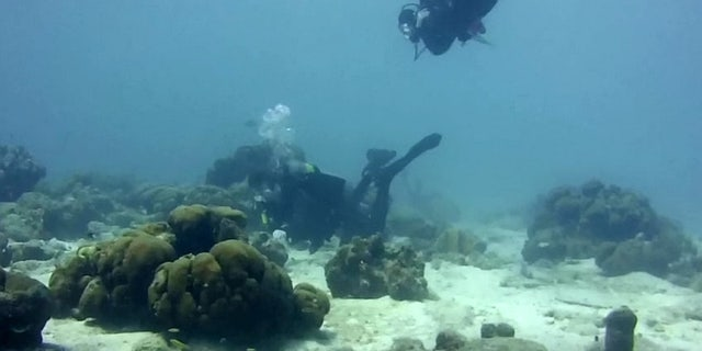 """I decided to propose on the first reef we dove together,"" the soon-to-be groom said."