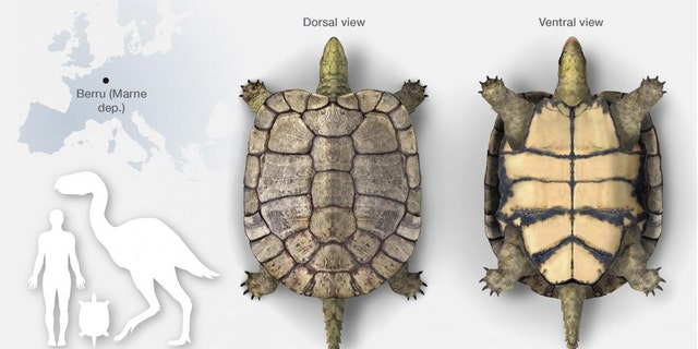 Laurasichersis relicta, an extinct turtle genus and species that corresponds to a new form. Credit: José Antonio Peñas, SINC)