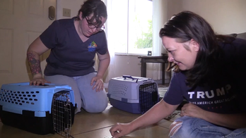 Animal shelters pull out the stops to find pets homes during coronavirus outbreak