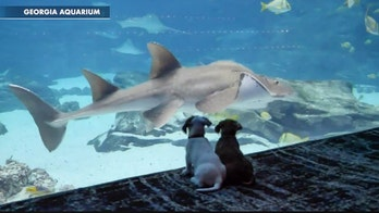Puppies from Georgia animal shelter visit aquarium during coronavirus lockdown