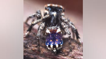Expert discovers spider that looks like van Gogh鈥檚 painting 'Starry Night'