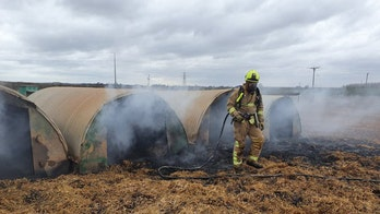 Pig swallows and poops pedometer, sparks farm fire