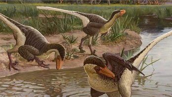 67M-year-old 'feathered dinosaur' found in New Mexico could be one of last-surviving raptors