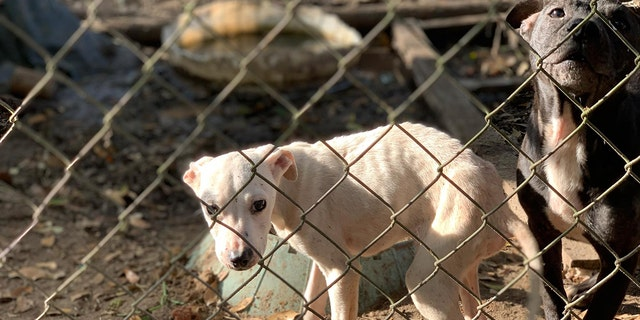 Dogs in deplorable conditions rescued from a home in northern Florida.