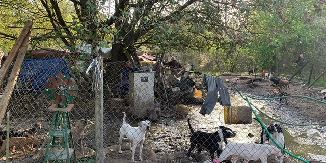 Sheriff Sam St. John said in the statement posted on Facebook that it was the worst case of animal hoarding and neglect that he's seen in his forty years in law enforcement.