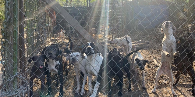 The majority of the 118 dogs were living outside in a fence-in area.