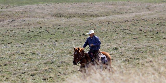 A cattle rancher near Dufur, Oregon, helping a friend herd cattle earlier this month.