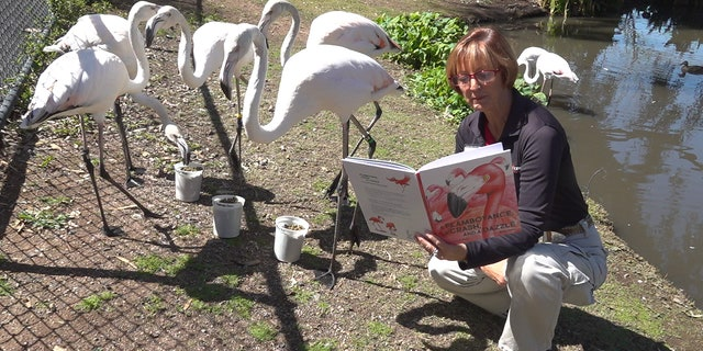 Senior guide and author Susan Stoltz reads 'A Flamboyance, a Crash and a Dazzle' story book to the Flamingos (Stephanie Bennett/Fox News).