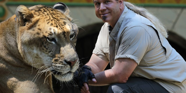 King Richard's Faire is set to open for the season. Dr. Bhagavan Antle brings animals from his preserve in Myrtle Beach, South Carolina. He is with Hercules the Liger. Hercules is 900 pounds and is in the Guinness Book of World Records as world's largest cat. (Photo by Jonathan Wiggs/The Boston Globe via Getty Images)