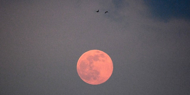 Two birds fly past the full moon, known as Worm Moon, in Moscow on March 9, 2020.