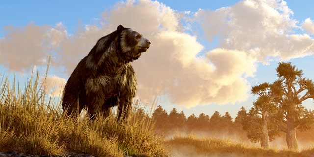 An unusual looking bear, the now extinct short faced bear, an animal of the last ice age, sits in the deep grass on the rocky shore of a prehistoric North American wetland. 3D Rendering. (iStock)