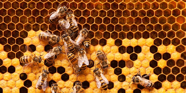 A wildlife control company in Richmond, Va. removed a massive 8-foot-long beehive from the ceiling of an apartment after concerned neighbors complained about bees accessing an abandoned apartment through the air conditioning ducts. (iStock)