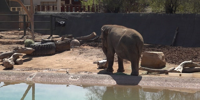 Elephants at the Phoenix Zoo (Stephanie Bennett/Fox News).