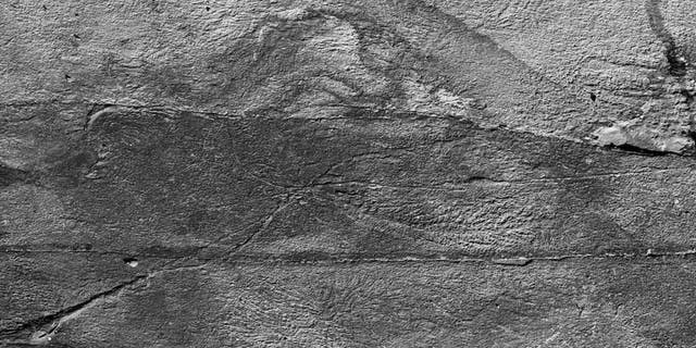 Fossilized threads, some as long as 12 feet, connecting organisms known as rangeomorphs, which dominated Earth's oceans half a billion years ago.