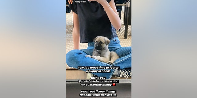 Kaia Gerber shows off her new adopted puppy.