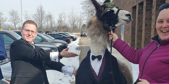 Shocky, the llama, had a custom-made tux and shirt for the big day.