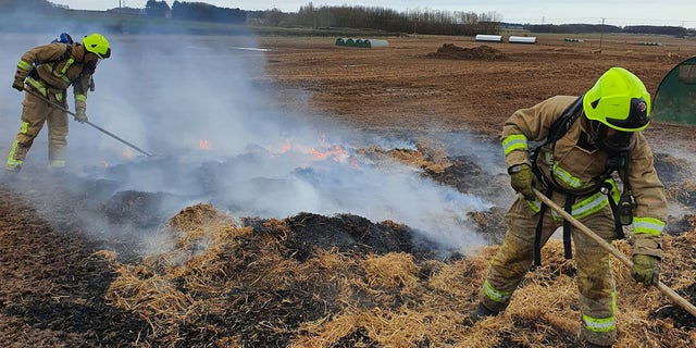 Firefighters extinguished an 800-square-foot area near four pig pens.